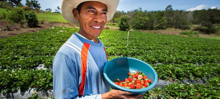 Agriculture bio : cette petite ferme arrive à nourrir 140 familles