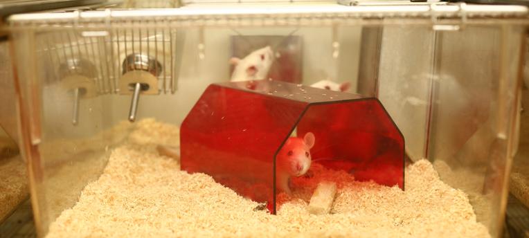 Tests cosmétiques sur les animaux: Une période révolue en Europe!