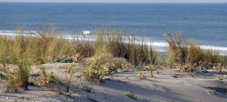 Dune plage naturiste